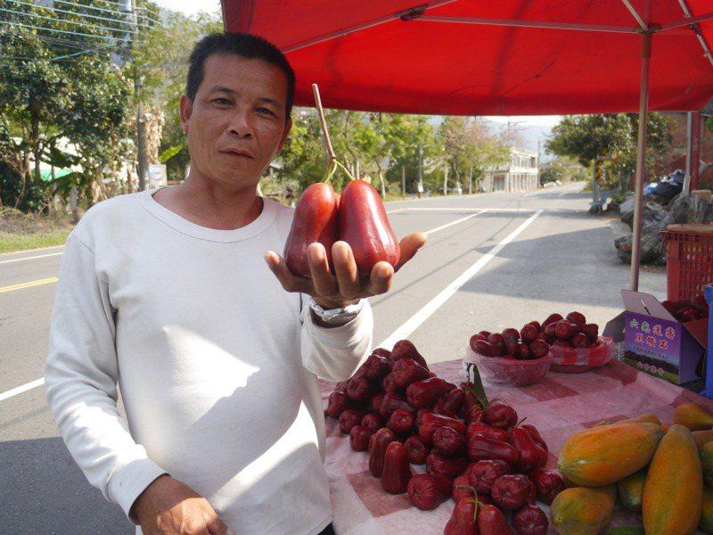 六龜農民栽種的蜜風鈴其實就是子彈蓮霧,深紅色澤且口感清脆。記者徐白櫻/攝影