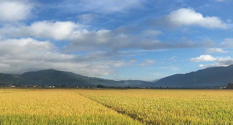 台東縣長濱圳昨天啟動分區輪流灌溉,將從山崙開始,每天灌溉1區。圖/長濱鄉農會提供