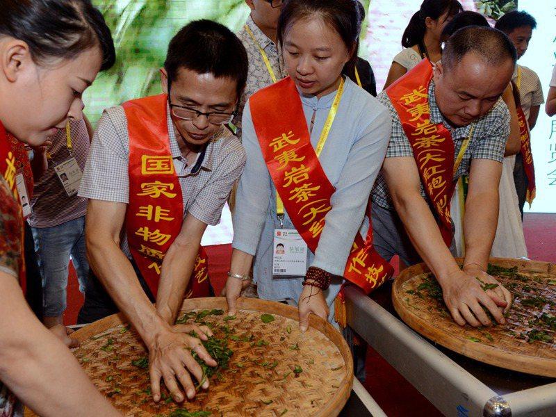 武夷岩茶價格飆漲,一斤賣到台幣200萬元。圖為專家展示岩茶製作技藝「揉捻」。新華社