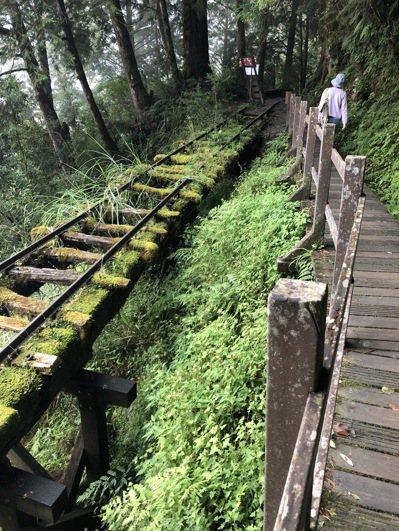 常到森林步道走走,多看綠色植物對眼睛有益。圖╱郭明洋提供