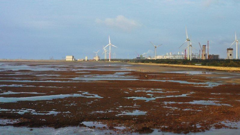 藻礁公投連署將達到安全份數,圖為退潮才會出現的大潭藻礁,一片紅通通的景象。記者陳正興/攝影