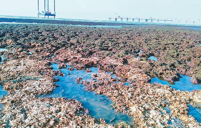 桃園市觀塘中油天然氣第三接收站,環團指嚴重破壞大潭藻礁。 圖/資料照片