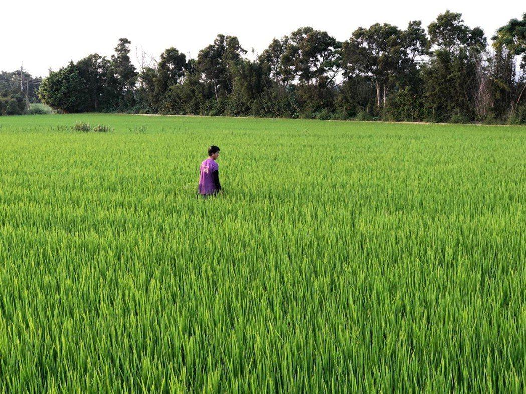 「花漾阿公」黃真鑾已屆78歲高齡,若想重現往日稻田景象,只能繼續拖著身體、抽水灌...