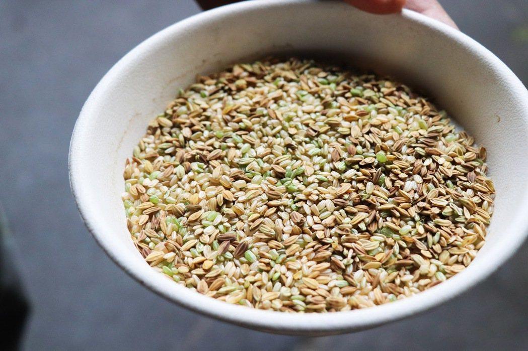 民國109年,桃園停灌地區的二期稻作的「青子」比率約四成,可見不成熟率高、品質不...