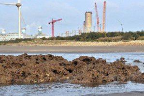 「藻礁公投」爭議釐清(下):不蓋三接就要繼續燃煤、重啟核四?