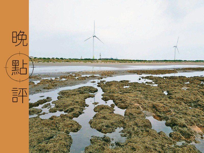 中油在桃園觀塘第三天然氣接收站興建案引發的破壞千年藻礁疑慮,終在近期引爆,藻礁公投案確定成案。 圖/中油提供