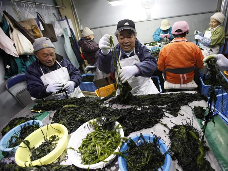 宮城縣的海帶等水產加工業需要大量的外勞援助。路透