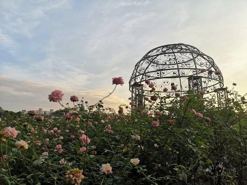 2021台北玫瑰展活動自3月12日至4月4日展出。  圖/北市公園處提供