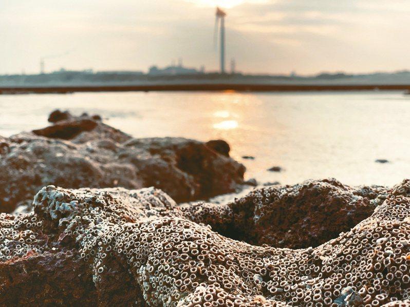 大潭藻礁公投連署確定過關,你/妳,真的關心藻礁嗎?圖/中央社
