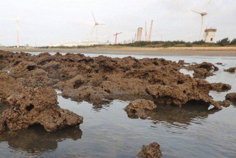「珍愛藻礁公投連署」衝破連署門檻,引發民進黨內討論。本報資料照片