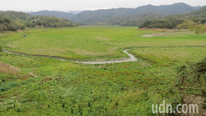 苗栗縣3大水庫同時見底,明德水庫上游更是長草已久。記者范榮達/攝影