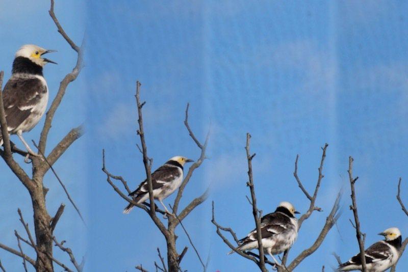 鳥兒高高的飛起,大聲唱歌的早晨。