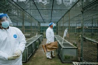 美國杜蘭實驗室有靈長類動物研究中心,培育實驗猴。取自鳳凰網