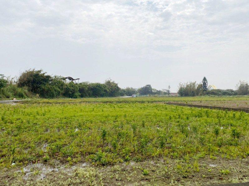 桃園市今年一期稻作停灌農田補償申請,爆發地主農民、代耕業者搶補償糾紛,農民陳情和醞釀聯合提告。記者曾增勳/攝影