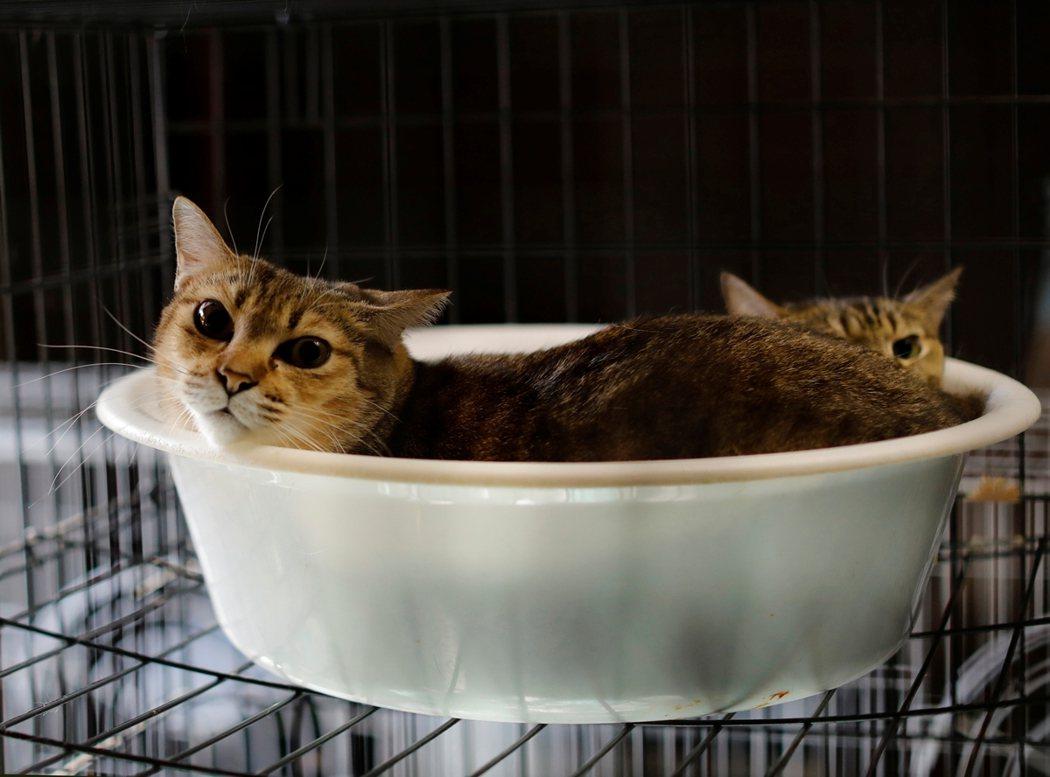 目前加藤利用他自己的住家、以及另外一棟名下的房子收容這些貓。不過從《路透社》的一...