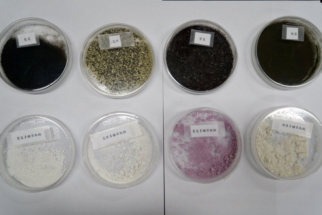 張淑微此次所開發食用藻類將用於美粧保健應用上。 大葉大學/提供。