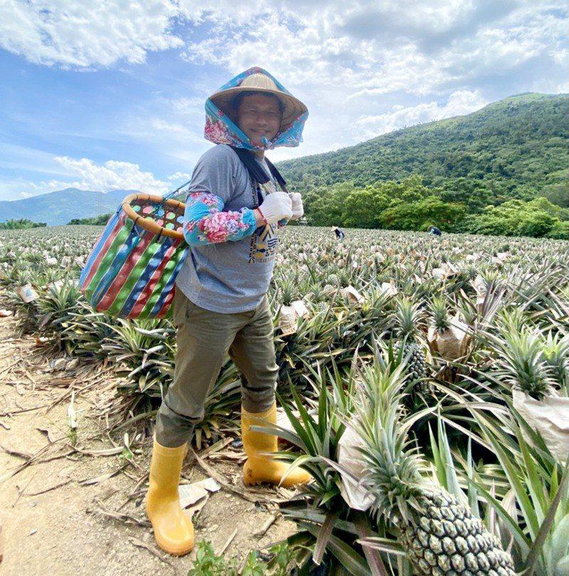 交通部長林佳龍曾赴台東推廣在地農場的手作鳳梨果醬遊程,被民眾笑稱「有像農婦」。圖/交通部提供