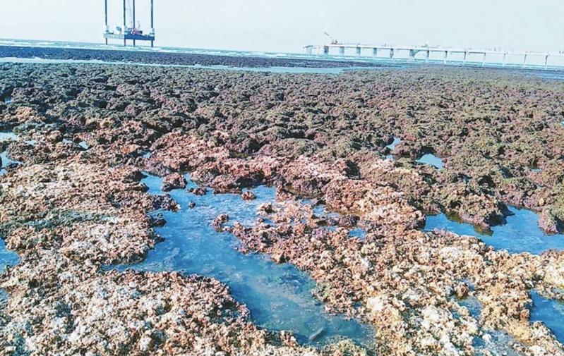 中油三接興建引發藻礁保育爭議,民團與民進黨「盟友」關係生變,珍愛藻礁公投連署突破50萬份,對蔡政府形成威脅。圖/聯合報系資料照片