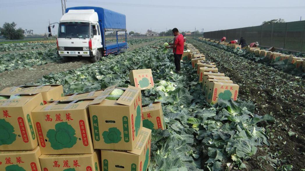 近來全台低溫配送物流因爆單喊暫停,生鮮業者急跳腳。 報系資料照