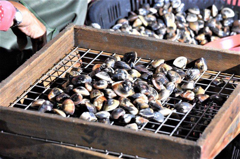 台南七股文蛤主要「靠天吃飯」,必須等老天下雨,才能解決鹽度的問題。圖/郭永慶提供