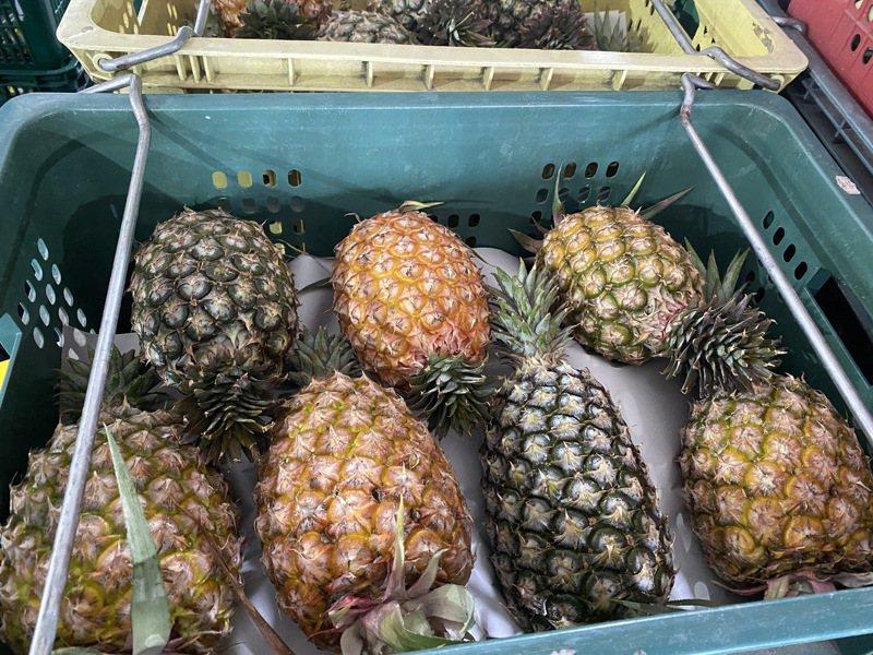 中國大陸3月起突然宣布禁止台灣鳳梨進口,有媒體報導,澳門也跟著在3月2日禁止進口台灣鳳梨,對此,農委會表示,目前還沒接獲相關訊息。報系資料照/記者劉星君攝影