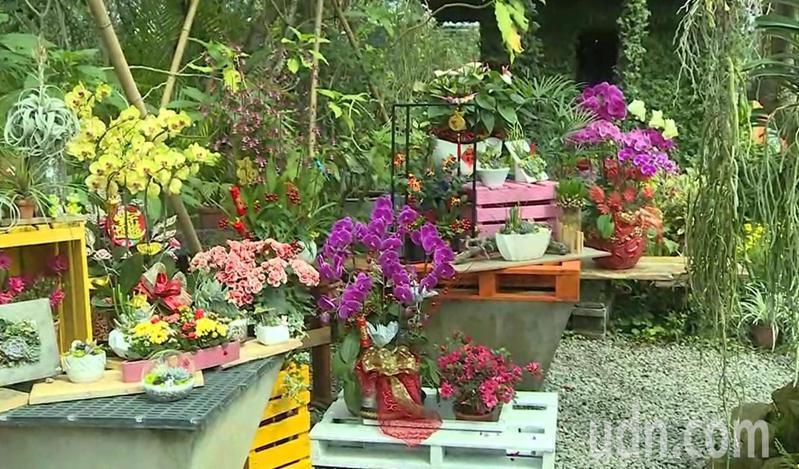 田尾公路花園協會專家如雲,尋找具市場潛力的民間高手設計組合盆栽。記者簡慧珍/攝影