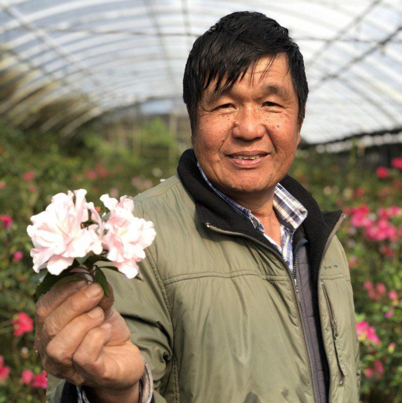 杜鵑花達人柳枝芳從原先不懂杜鵑花,靠慢慢摸索,研發出300多種新品種。圖/柳枝芳提供