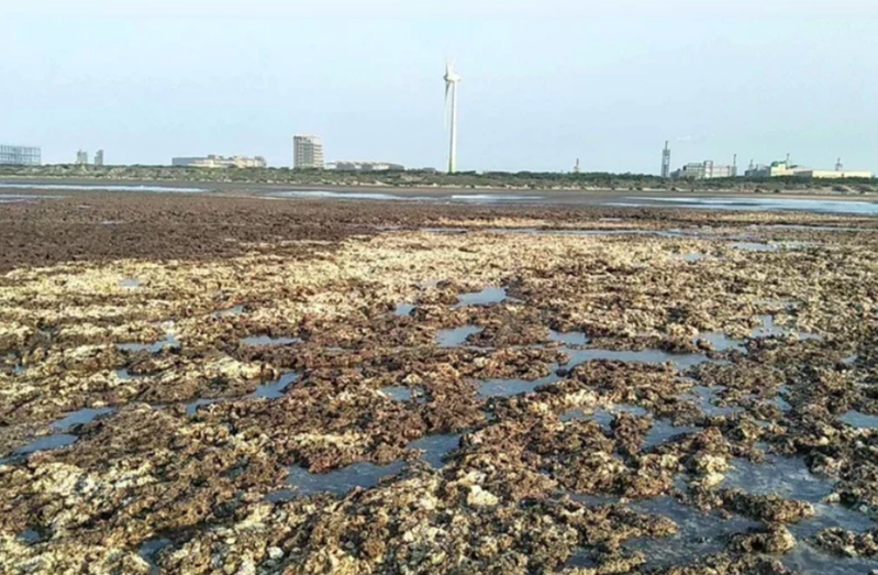 藻礁公投議題持續延燒。本報資料照片