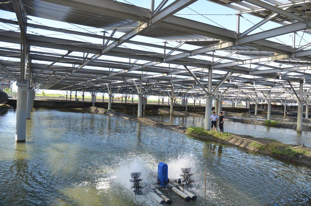 政府太陽光電產業政策去年開始全力推動爭議較少的漁電共生方案,目前盤點出可供漁電共...