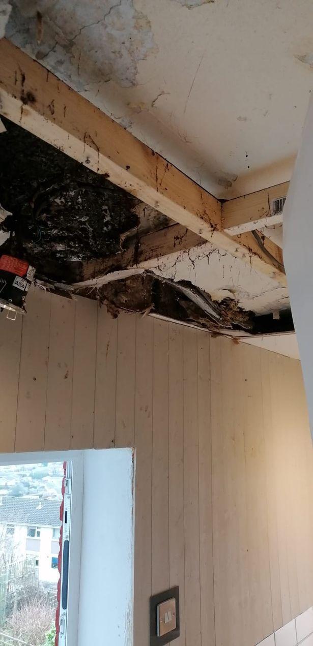 裝修二樓淋浴間出現漏水問題,爾後又發現房屋後半部乾腐問題。圖/取自waleson...