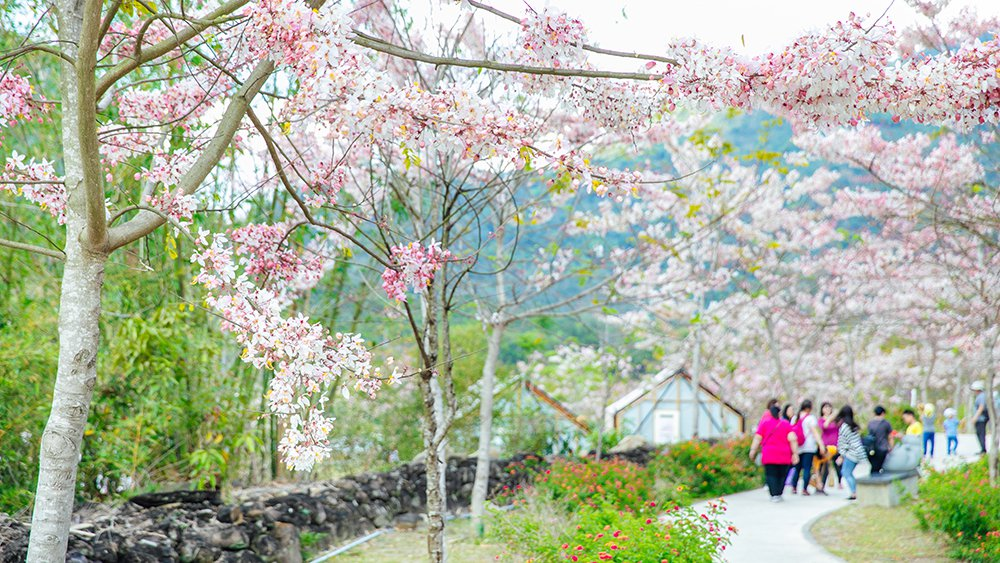 春暖花開正是賞花好時節。  圖/蔡嘉瑋 攝影