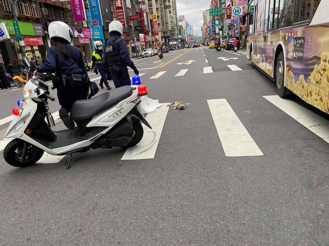 貓被車撞倒在斑馬線上受傷奄奄一息,3名警員趕緊過去幫忙。圖/翻攝臉書社團