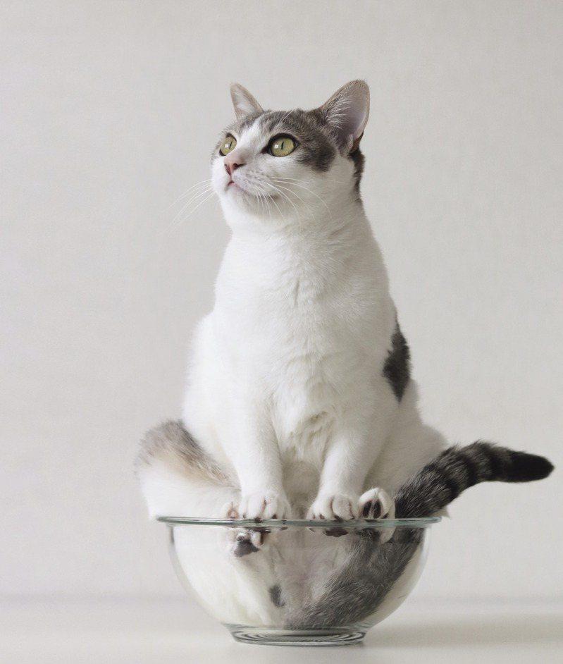 貓咪會在中途做出假動作,裝作不感興趣。試著停下來、任時間流逝、迂迴前進,有的還會一副不知情的樣子,接著稍微一不注意,食物就被吃掉了……這就是貓咪的行事作風。時報出版提供