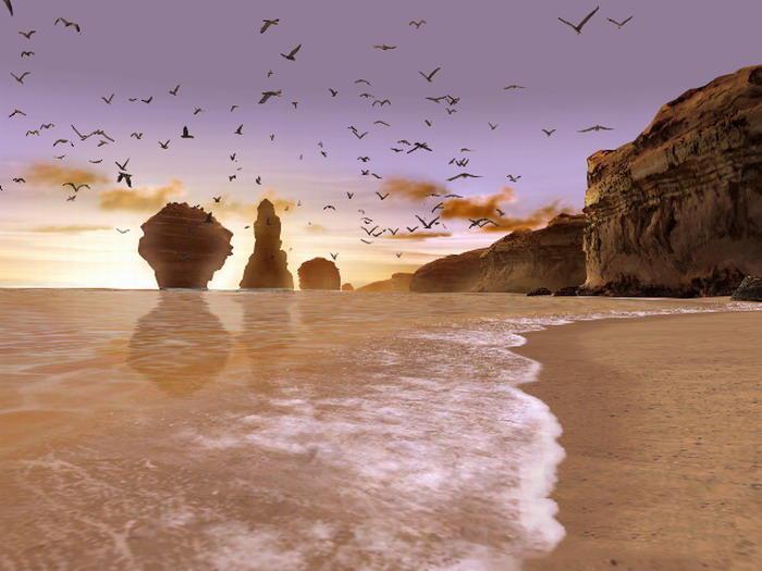 無數海鷗飛過的沙灘