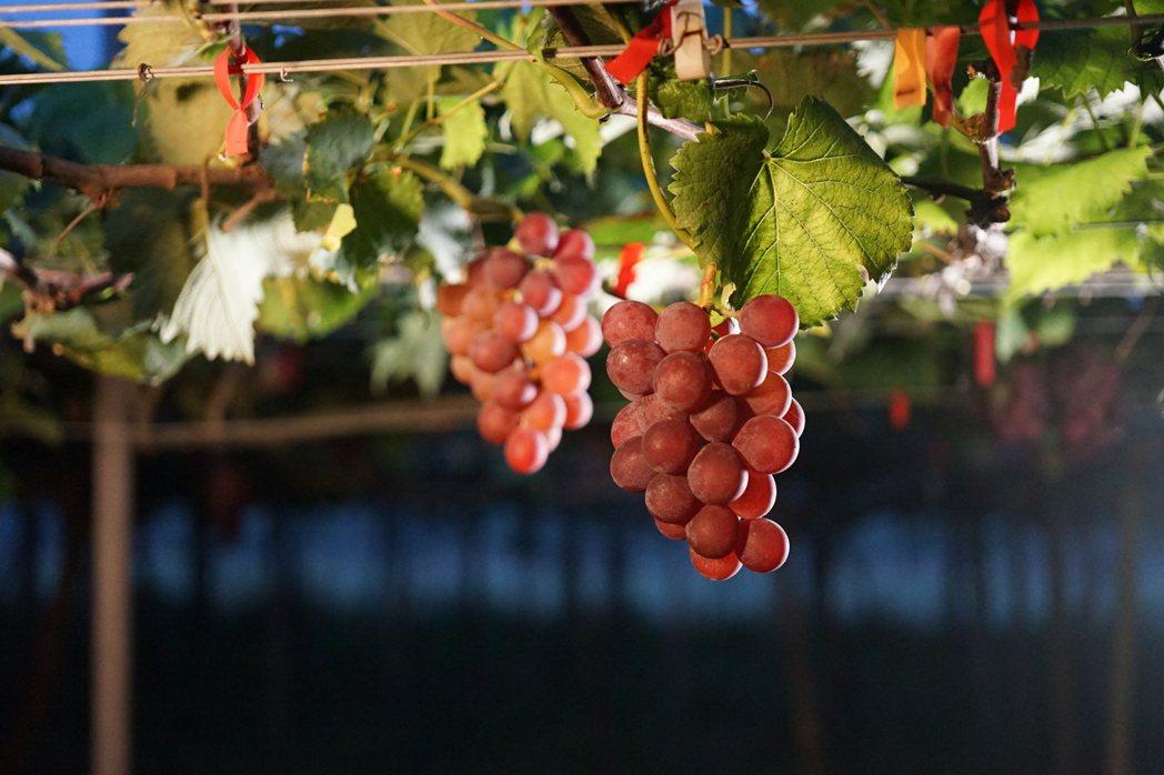 葡萄酒已成一門日新月益的大學問。圖/林裕森提供 <b style=