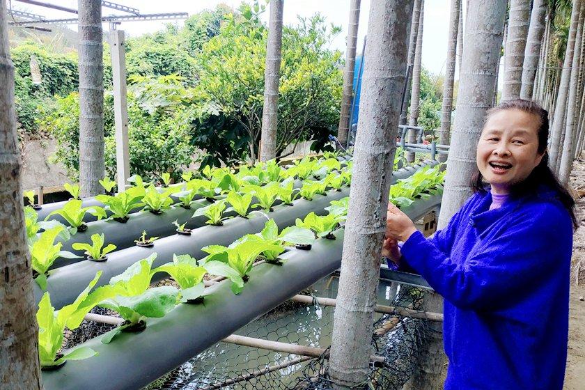 糞箕窩溪檳榔園由村民開創魚菜共生園區。 中國科大/提供
