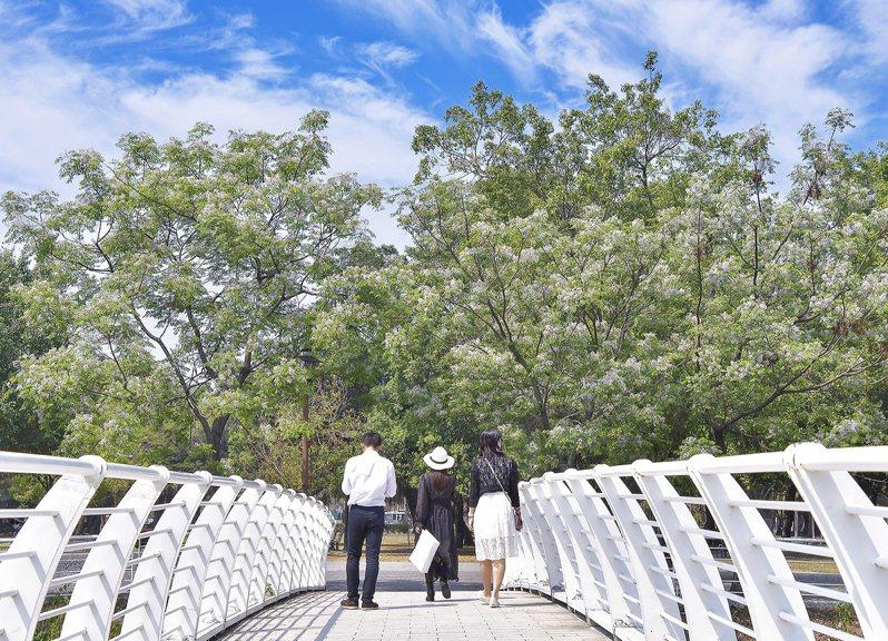 春風輕拂,百花爭妍,高雄市近年在公園、綠地及校園種植的原生種楝樹也趕上花季。圖/高雄市養工處提供