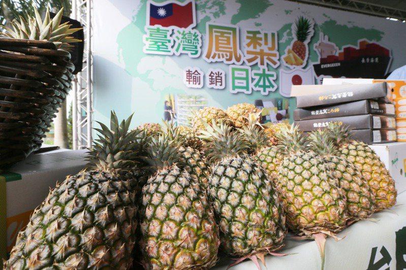 大陸宣布禁運台灣鳳梨,對國內產銷形成衝擊,但也有農民提前轉型,幫鳳梨找到出路。圖為屏東鳳梨裝櫃銷日。圖/聯合報系資料照片