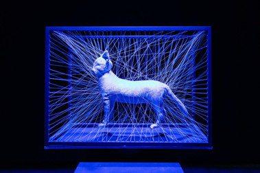 從科技、道德辯證到藝術呈現:空總C-LAB《虛幻生命:混種、轉殖與創生》
