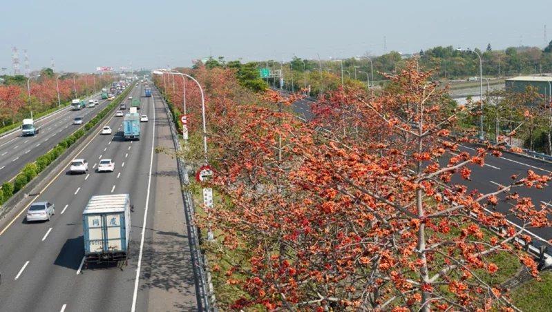 國道1號北斗路段木棉花。  圖/高公局提供