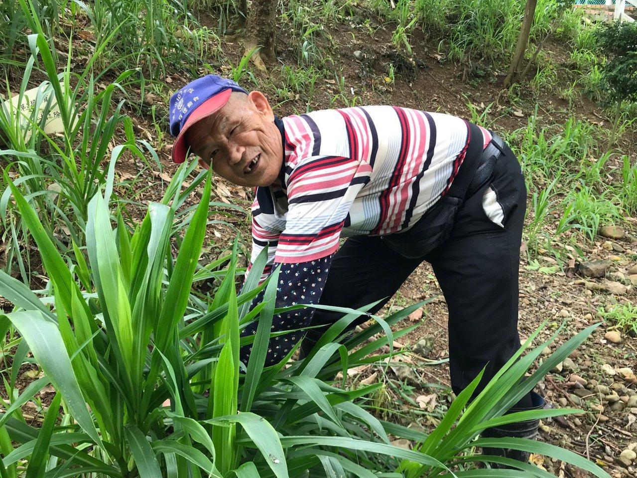 新北市同榮國小志工戴正雄即便右腳傷殘、行動不便,10多年來仍到校當志工整理花草。...