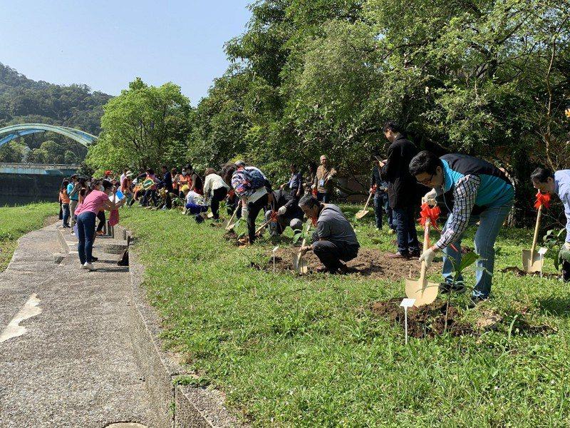 慶祝312植樹節,坪林區公所在親水廣場水岸長廊周邊栽種60株穗花棋盤腳樹。 圖/大新店有線電視提供