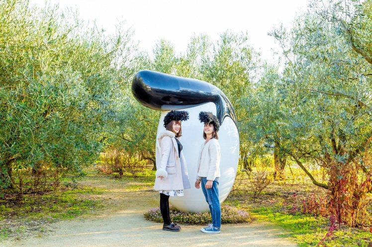 橄欖飛機頭。圖/香川縣提供提供