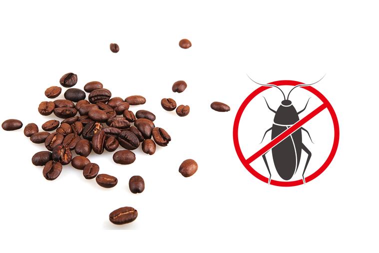 咖啡有蟑螂,你敢喝嗎? 圖/ingimage