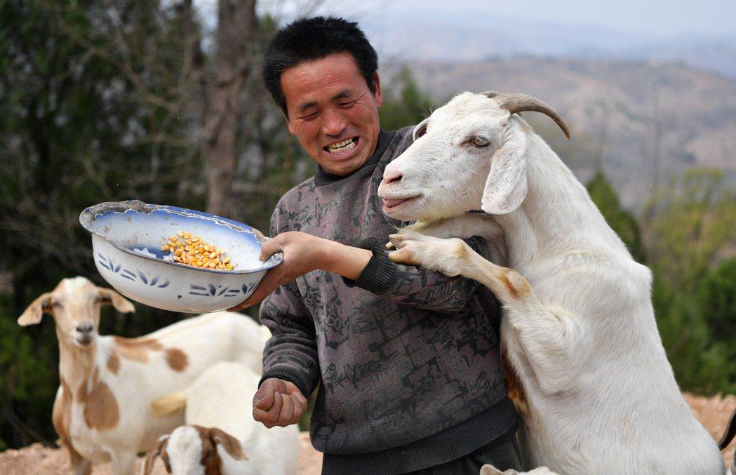 《央視》周一晚間播出黑心企業踢爆大會〈3.15晚會〉調查報導,揭穿了華北的牧羊重...