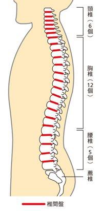 脊椎歪斜後重心偏移,頸部必須花費更多的力氣,才能支撐重量不輕的頭部 圖/蘋果屋出...