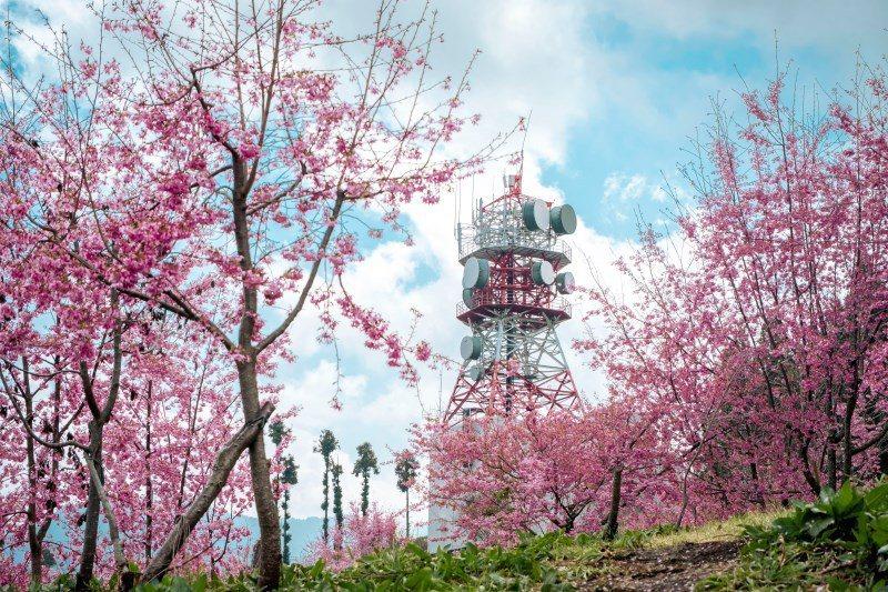 偽東京鐵塔的電信發射塔,是千櫻園必拍景點!圖片來源:IG@reshieh