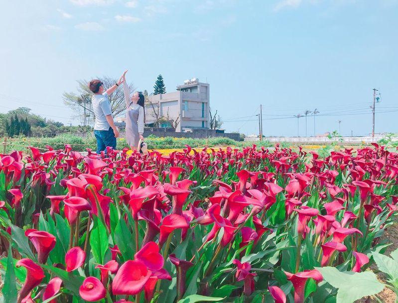 ▲賞海芋景點推薦-桃園彩色海芋季。(圖/betty83262006,Instagram)
