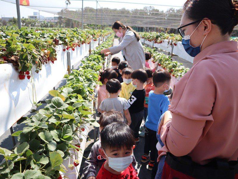 苦旱節水,台中市大雅區一處草莓園果農免費供弱勢團體民眾體驗採收。圖/業者提供