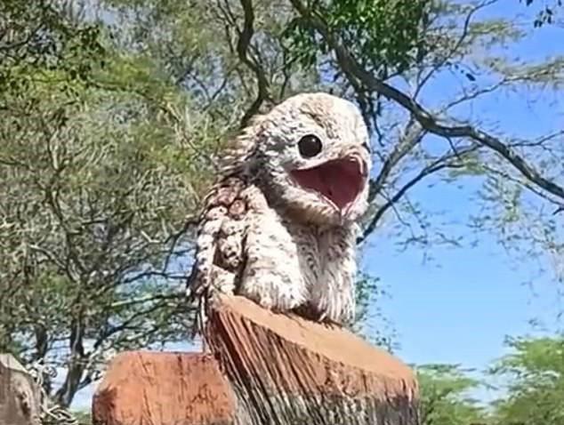 南美出現長相超奇特的鳥。圖/取自dailymail